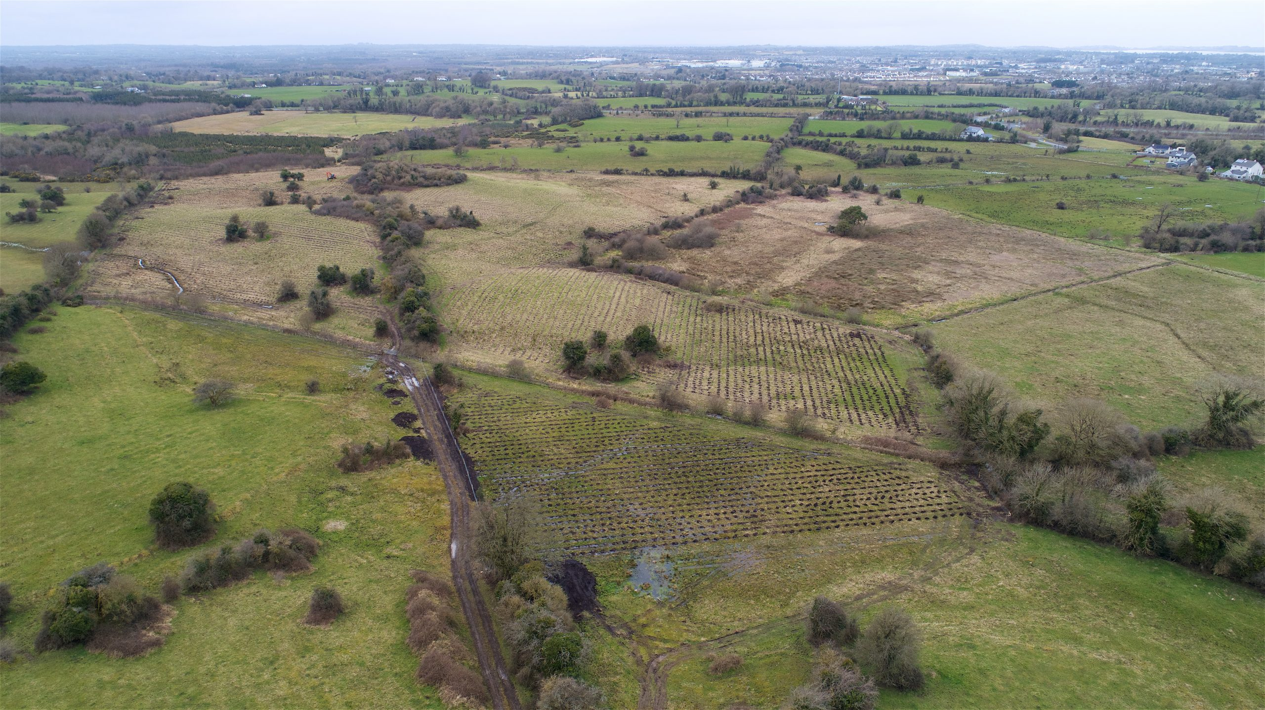 The site of a new native woodland with over 33,000 trees in Burnellstown, County Westmeath
